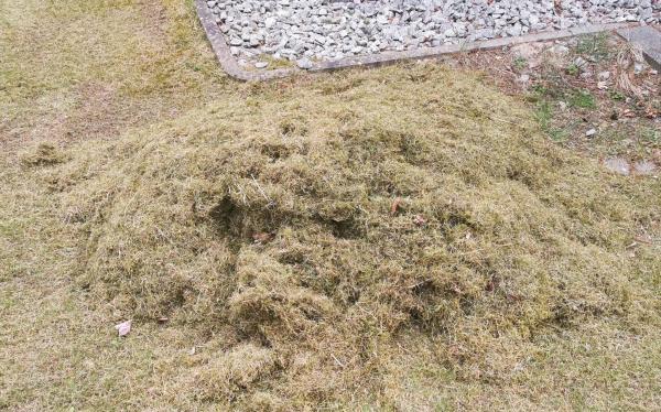 Rasenfilz nach dem Lüften
