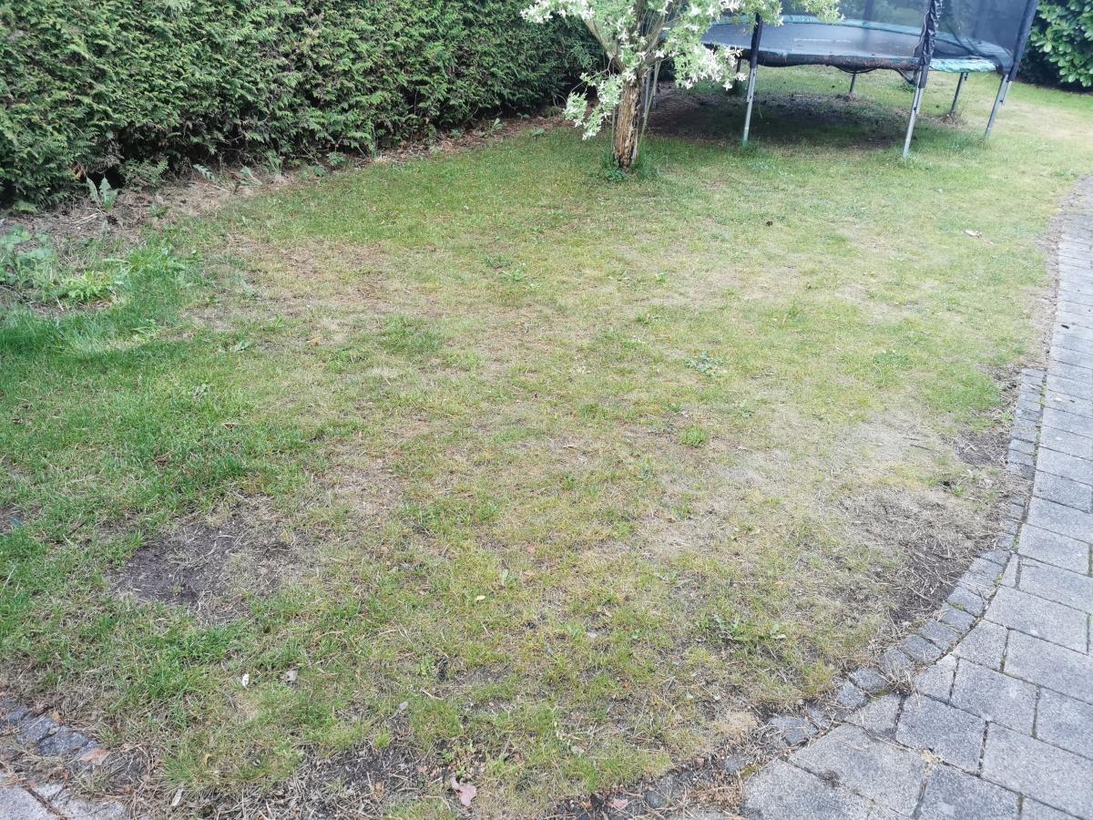 Schlechter Rasen vor Behandlung