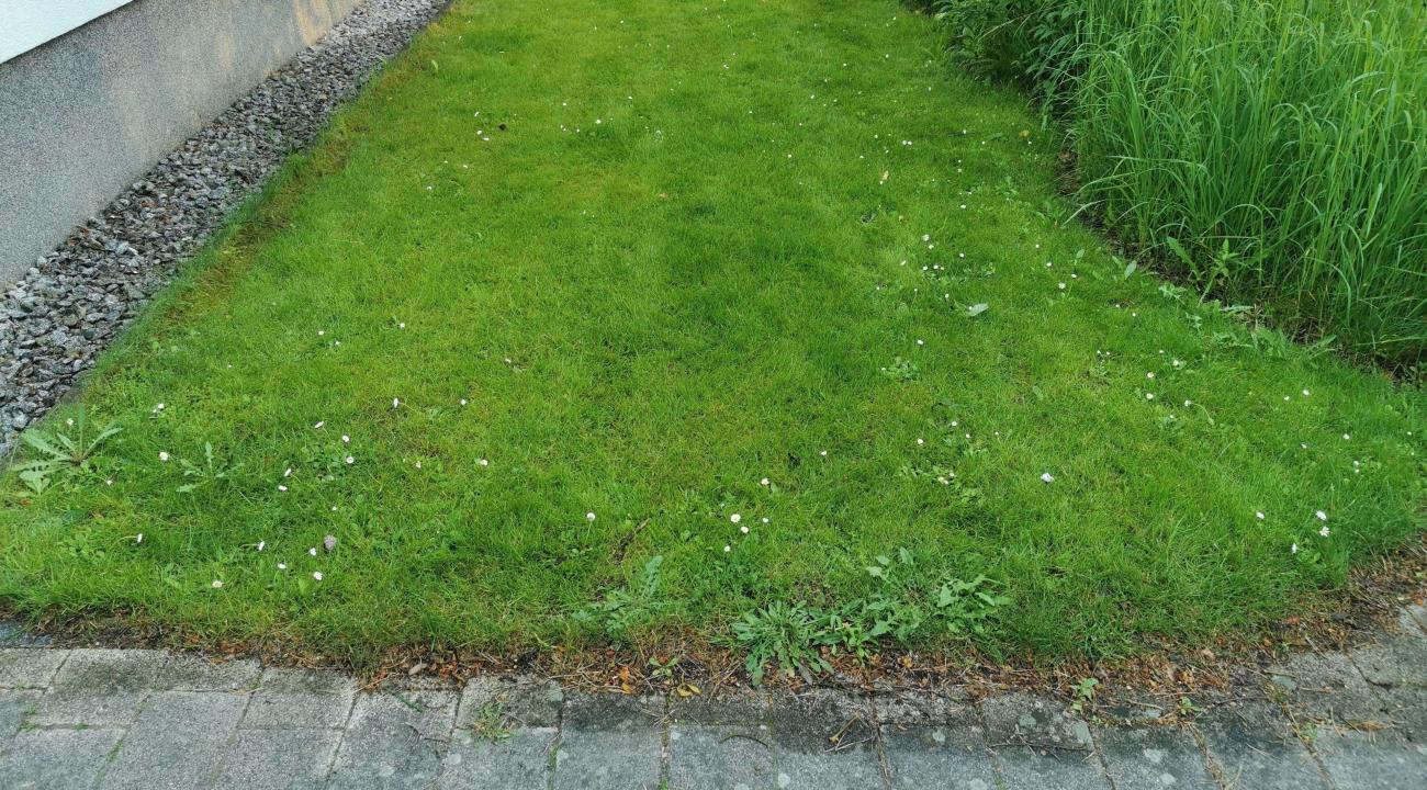 Rasen vor der Behandlung mit dem Wolf Garten Dünger mit Unkrautvernichter