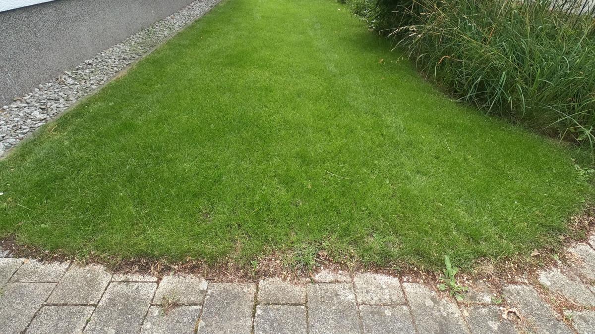 So sah das Gras 6 Wochen nach der Behandlung aus