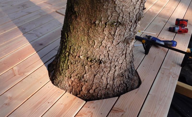Baumstamm umrandet von Holzterrasse